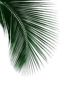 #palmleaf #palmtree #wallart #tropicalart #botanicalart #botanical #art #print #decor