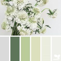 today's inspiration image for { flora tones } is by @heather_page ... thank you, Heather, for another gorgeous #SeedsColor image share!