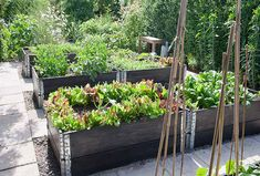 Types Of Urban Gardening - Urban Gardening Love Garden, Easy Garden, Dream Garden, Wood Planter Box, Wood Planters, Raised Garden Beds, Raised Beds, Fruit Garden, Vegetable Garden