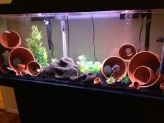 My first cichlid tank. I wanted to do a easy setup so I decided to use clay pots for my first setup.: