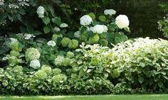 massif avec fleurs blanches - Recherche Google