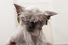 15 Reasons Why Wet Cats Are Hilarious 2 - https://www.facebook.com/different.solutions.page