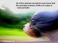 Isn't this why we all love and have so much to learn from our animal friends?