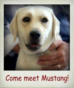 Come meet him!