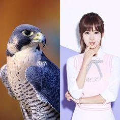 CelticAnimalZodiac&KPOP // Falcon // Hyeyeon of BESTie