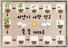 봄이라 식물 많이 키우실텐데과학영역에 전시할 식물의 성장과정 자료 가지고 왔어요 강낭콩으로 만든건데.... Classroom Design, Classroom Decor, Diy And Crafts, Crafts For Kids, Family Day Care, Board For Kids, Kindergarten Art, Garden Theme, School Projects