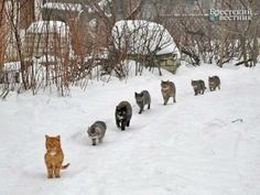 Cat Brigade! from Cats Rule!