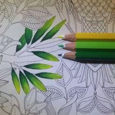 ⓑⓞⓐ ⓝⓞⓘⓣⓔ!!!! Sexta-feira é diaaaaa!!!! #combinandocoresJSI  combinação que eu AMEI de hoje!!! VERDE ESCURO➕VERDE CLARO➕AMARELO!!!  lindo lindo!!! Usei lápis AQUARELÁVEL!!! Amei essas folinhas!!! Fade Out Lines ☺️ --------------------------------------------------- #⃣ Use #jardimsecretoinspire para que seu colorido seja compartilhado aqui no nosso perfil!! ➡️ Envie por Direct também as suas fotos!! #jardimsecretoinspire #jardimsecreto #livrojardimsecreto #secretgarden #amamosj...