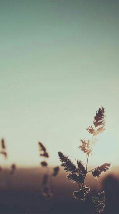Nature photo by Mihoc Iris Aesthetic Pastel Wallpaper, Aesthetic Backgrounds, Aesthetic Wallpapers, Flower Phone Wallpaper, Iphone Background Wallpaper, Natur Wallpaper, Landscape Photography, Nature Photography, Beautiful Nature Wallpaper