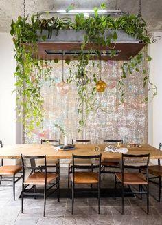 plantas colgantes para dummies sobre la mesa del comedor