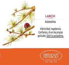Larch Autoestima- Flores de Bach de Naturset Bach Flowers, Yoga For Kids, Flower Cards, Reiki, Flower Power, Nature, Chromotherapy, Medicinal Plants, Appliance Cabinet