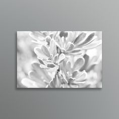 Sophisticated black and white macro photo of the soft Silverbush leaves. Macro Photo, Traditional Artwork, Tapestry, Leaves, Fine Art, Art Prints, Black And White, Creative, Flowers