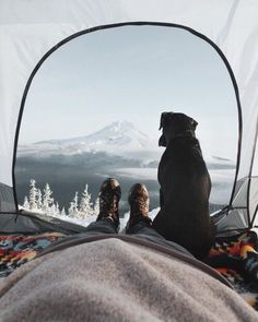 Собака + друг + путешествие + зима + приключение + палатка + красивый вид