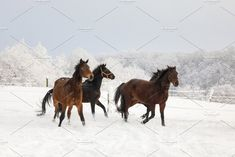 Horses are galloping on snow-covered by konstantin.tronin on @creativemarket