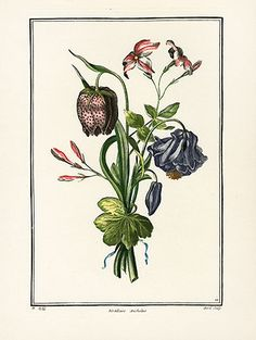Botanical Etchings after Tessier, Prevost, Van Geert - Fritillaria, ETH12 $75 - Louis Tessier was one of the most eminent botanical artists of his time, and his beautiful floral paintings are almost unobtainable the original edition from the 1700s