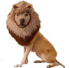 Animal Planet Lion Dog Costume http://keeplookingbusy.com/itemDetails.aspx?id=B00CBMWRZG