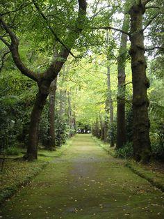 Parque Terra Nostra, Furnas - Açores, Portugal