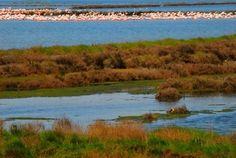 Tre mesi all'insegna del birdwatching e del turismo slow nel Parco del Delta del Po emiliano-romagnolo con Primavera slow.