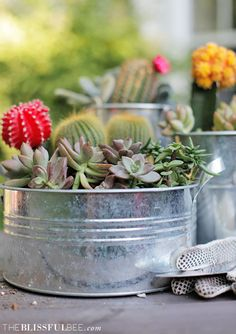 A succulent garden provides so many beautiful color inspirations straight from nature! image via The Blissful Bee