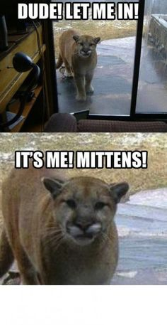 Seems legit... hilarious puma joke pic! For the best funny animal pics with jokes visit www.bestfunnyjokes4u.com/funny-animal-pics/
