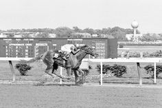 Pictured Winning The Belmont S. Chateaugay(1963)(Colt) Swaps- Banquet Bell By Polynesian. 4x5 To Selwene, 5x5 To Polymelus. 24 Starts 11 Wins 4 Seconds 2 Thirds. $360,722. Won Ky Derby, Belmont S, Jerome H, Blue Grass S, 2nd Preakness S, Roseben, 3rd Dwyer S, Travers S. Died In 1985.