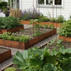 The Advantages Of Growing Food Indoors With Hydroponic Gardening Herb Garden, Garden Beds, Vegetable Garden, Small Gardens, Outdoor Gardens, Hydroponic Farming, Herbs Indoors, Growing Vegetables, Shade Garden