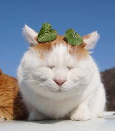 小さいわさびの葉っぱ  のせ猫オフィシャルブログ Powered by Ameba