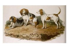 Early Type Beagle Dogs--Giclee Print