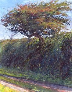 bofransson:  Tresidder Hawthorn in September By Paul Lewin