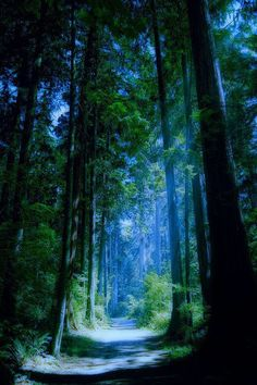 Blue Forest, Vancouver, British Columbia.