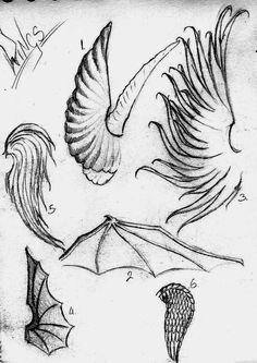 A study of wings