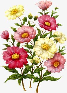 Flower vector material flower vector material PNG and Clipart Botanical Flowers, Botanical Prints, Art Floral, Flower Prints, Flower Art, Art Flowers, Impressions Botaniques, Flower Clipart, Vector Flowers