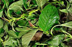 Βλήτα: Η διατροφική αξία και τα οφέλη τους - Εναλλακτική Δράση Small Gardens, Botany, Natural Remedies, Spinach, Herbalism, Plant Leaves, Health Fitness, Herbs, Vegetables