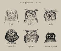 coffee owl chart