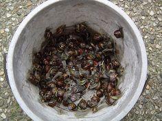 Slakken weren met knoflook extract