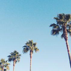 Palm Trees, Photographs, Instagram Posts, Plants, Palm Plants, Photos, Plant, Planets