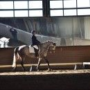 The Ten Habits of Highly Effective Dressage Riders by Nancy Kotting | Watapama