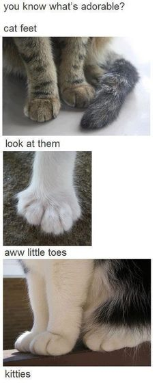 cat feets is adorable