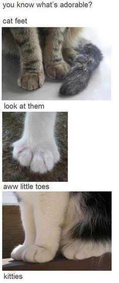 Cat feets...