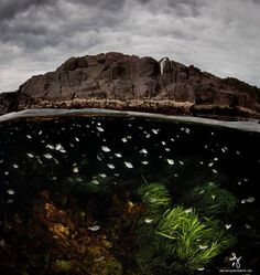 Half-underwater photos