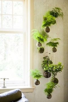 """KOKEDAMA The name is derived from the Japanese words for moss (""""koke"""") and ball (""""dama""""), essentially creating a string garden. Kokedama is a great option for displaying low-light loving plants and can even be arranged as a hanging garden. Indoor Green Plants, Garden Plants, Moss Garden, Japanese Indoor Plants, Planter Garden, Herb Garden, Indoor Ferns, Hanging Plants Outdoor, Porch Plants"""