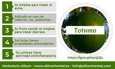 El jarabe de la pulpa del #totumo se usa por vía oral para tratar afecciones respiratorias, tales como #asma, #bronquitis, #catarro, #pulmonía, #resfriados o #tos.
