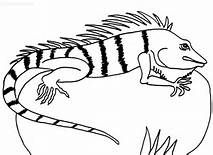 iguana coloring sheets - Yahoo Image Search Results