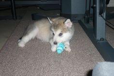 Baby Luna, 3 months old