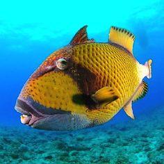 beautiful fish in the sea   Beautiful Ocean Creature !   Fish