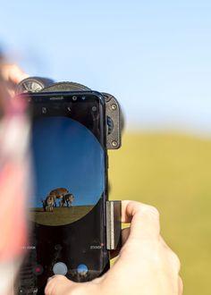 Smartphone Adapter - Anleitung, wie man ein Fernglas mit Smartphone nutzt Smart Watch, Smartphone, Golden Eagle, Binoculars, Switzerland, Smartwatch
