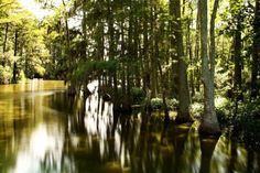 A secluded cove off Salmon Creek near the dig site in North Carolina where archaeologists have discovered several pieces of Border ware and other materials that may suggest an early English settlement in the area.