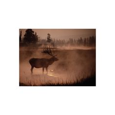 Bull Elk in the Morning in the Smoky Atmosphere of Yellowstone... (50 NZD) ❤ liked on Polyvore featuring home, home decor, wall art, artists, interior wall decor, home wall decor, deer home decor and mounted wall art