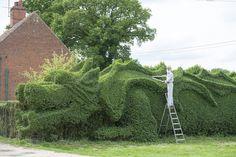 English Gardener Grows Dragon in Front Yard