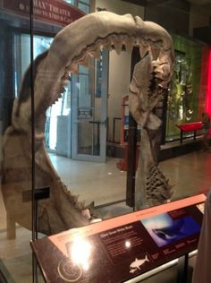 TheBlaze went inside the Smithsonian with an expert to talk shark teeth (plus, how you can find your own)